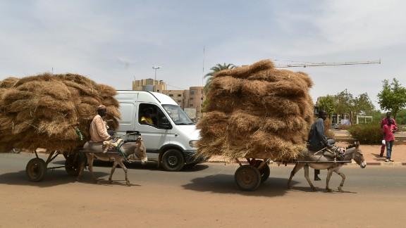 Donkeys transport straw through the district of Niamey, Niger.
