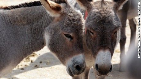 Why is China buying up the global supply of donkeys?