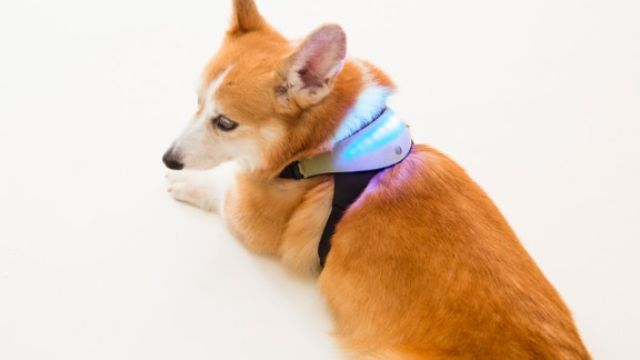 Designed to help people better understand their pets, Inupathy measures a dog's heart rate and pulse variations to determine how it's feeling. Starting from US$149 for Indiegogo supporters, the harness is covered in LED lights that change color to reflect a dog's mood. It glows blue when a dog is calm, red when excited, bright white when focused, and shows a rainbow display when the pooch is happy. The data is stored online so an owner can review trends.