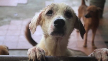 Abandoned: The four-legged victims of Venezuela's economic crisis