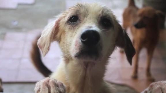 venezuela starving pets orig_00004202.jpg