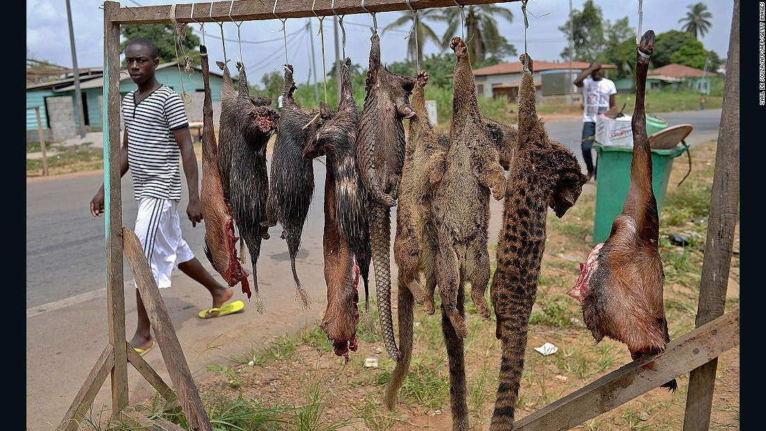 Monkey and bat bushmeat has been linked to the spread of the deadly virus. Here, pangolins, bush rats and tiger cats are sold at the roadside outside Bata, Equatorial Guinea, in January 2015.