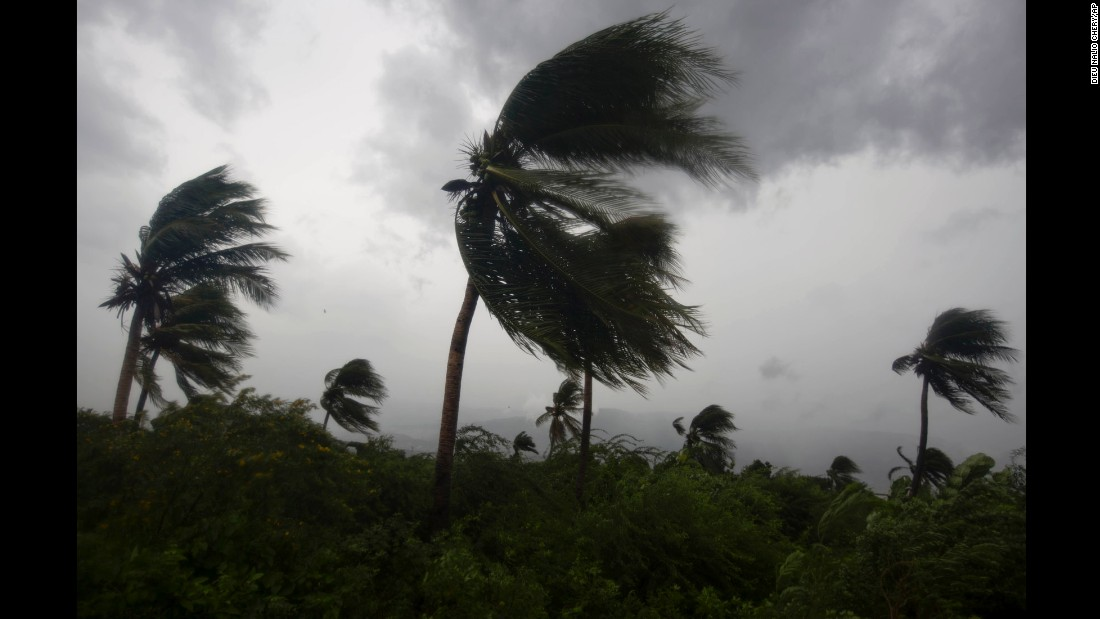 Hurricane winds blow against palm trees in Port-au-Prince.
