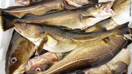 British cod fish are moving to cooler waters, say scientists.