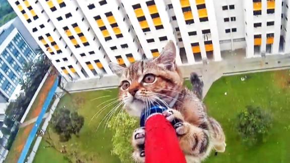 singapore kitten rescue spca bpb orig_00000000.jpg
