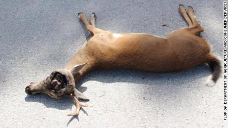 Florida Dog Bite Cases