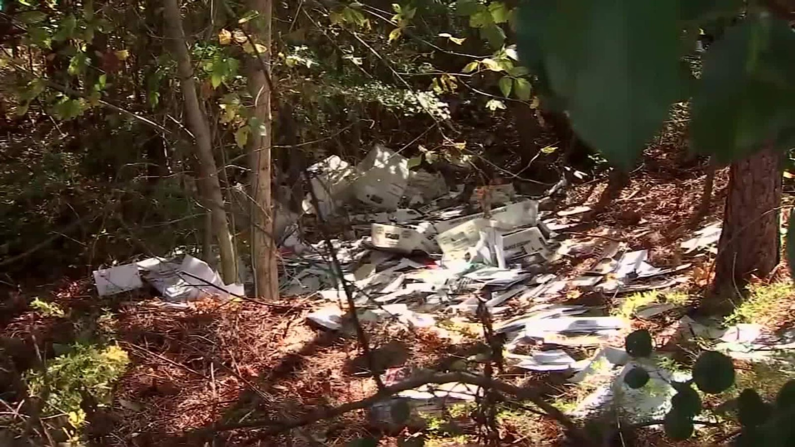 Piles of mail dumped in woods