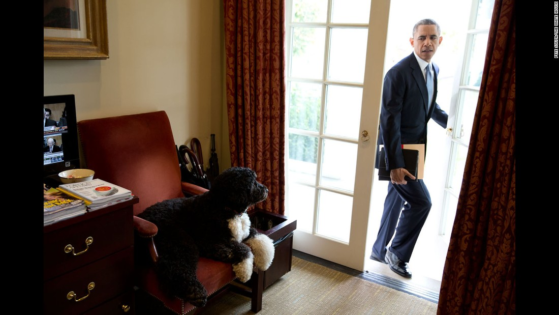 "Bo, one of the Obamas' dogs, hangs out in the Outer Oval Office as the President begins his day on November 6, 2013. ""Each morning, the President always enters through this door rather than the direct outside door to the Oval Office,"" White House photographer Pete Souza said."