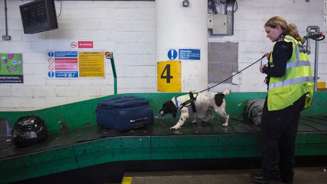 A UK Border Force detector dog helps check for illegal drugs in luggage arriving at Gatwick Airport on May 28, 2014 in London.