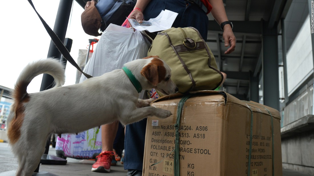 An airport policeman and his sniffing dog inspect a passenger's luggage at the airport in Manila on September 1, 2014.
