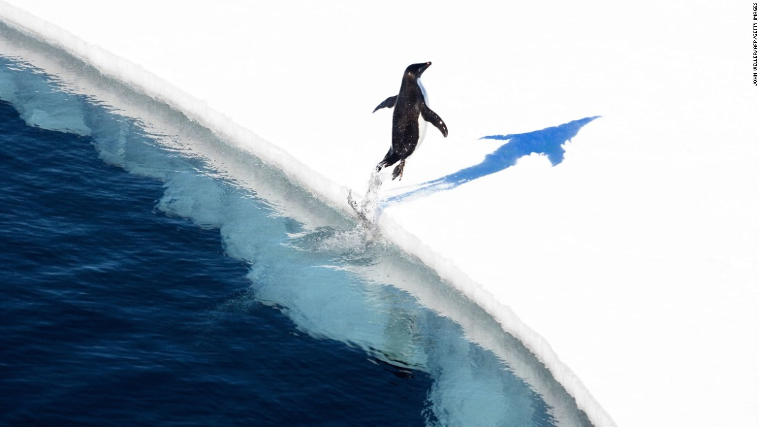 "A penguin jumps out of Antarctica's Ross Sea in this photo released by the Antarctic Ocean Alliance on Friday, October 28. The sea, home to penguins and killer whales, <a href=""http://www.cnn.com/2016/10/27/world/ross-sea-antarctica-worlds-largest-protected-area/"" target=""_blank"">has been declared an official Marine Protected Area</a> -- the largest in the world."