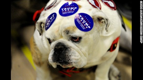 Republican Presidential nominee Donald Trump supporter and pet bulldog is decked out in  campaign stickers during a Trump rally at the Bank of Colorado Arena on the campus of University of Northern Colorado in Greeley, Colorado on October 30, 2016.