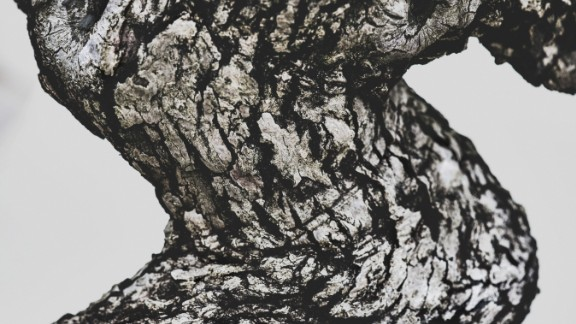 """""""I wanted nothing superfluous in these images. I sought to strip away everything until I reached the essence of the tree, the beautiful curve abstracted into this interesting, textured form,"""" Voss says. (Credit: Stephen Voss)"""