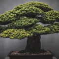 bonsai art 4