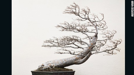 Bonsai masters: The ancient secrets behind their centuries-old trees