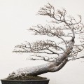 bonsai art 5