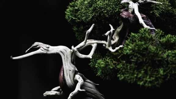 """Voss made nearly 80 trips to the US National Arboretum over a two-year period and the project evolved into a fine art book entitled """"In Training,"""" which refers to the art of training a bonsai. Voss captured abstract and emotive images of nearly 75 trees from the Arboretum's collection. (Credit: Stephen Voss)"""
