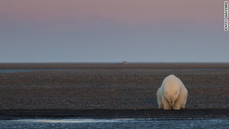 Polar bears will struggle to survive if climate change continues, says report
