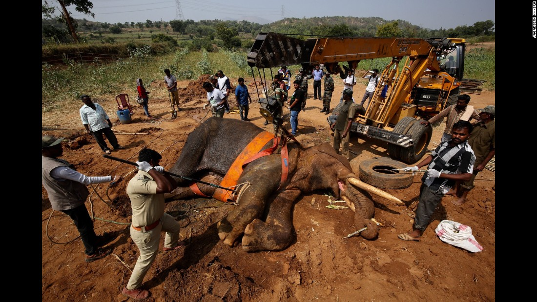 Indian officials and animal rescue team members assist an injured elephant named Sidda on the outskirts of Bangalore, India, on Wednesday, November 9. According to local media, the wild elephant has been suffering from numerous injuries, and the Indian Army joined with the state forest department to help Sidda.
