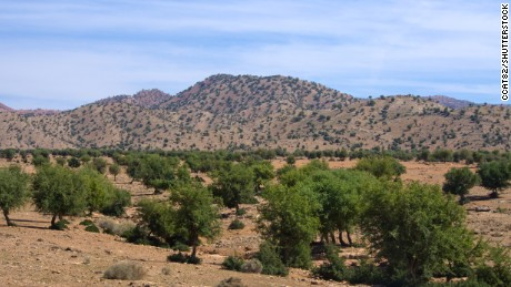 Locals and the government are working hard to ensure Argan trees are preserved.