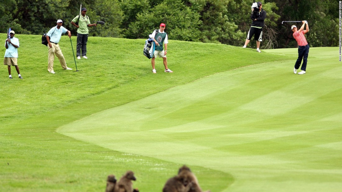 In 2014, English golfer Luke Donald was forced to dodge a fast moving baboon while playing at the Nedbank Golf Challenge.