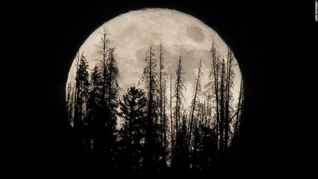 Evergreen trees are silhouetted on the mountain top as a supermoon rises over a ranch in Silverthorne, Colorado, on November 14.