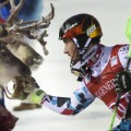 levi skiing world cup reindeer gallery 6