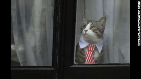 A cat named 'James' wearing a collar and tie looks out of the window of the Ecuadorian Embassy in London on November 14, 2016. WikiLeaks founder Julian Assange had been held there since 2012.