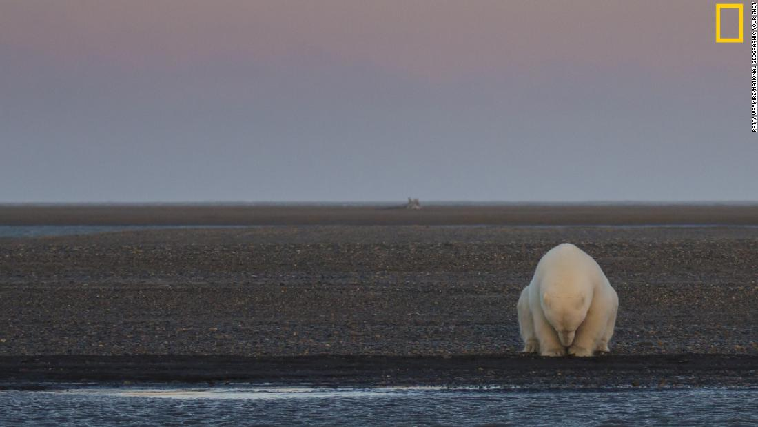 "The ""Climate Change -- In Focus"" exhibition shows the effects of climate change. <br />Pictured: A solitary bear sits on the edge of one of the Barter Islands, Alaska. There is no snow, when at this time of year, there should be,"" wrote photographer Patty Waymire. <em>Via National Geographic </em><a href=""http://yourshot.nationalgeographic.com/"" target=""_blank""><em>Your Shot</em></a>"