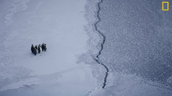 Photo: Kira Morris. A group of emperor penguins faces a crack in the sea ice, near McMurdo Station, Antarctica. Via National Geographic Your Shot