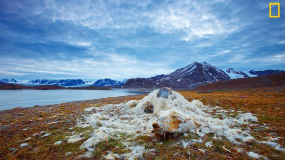 "Photo: Vadim Balakin, Russia: ""These polar bear remains have been discovered at one of the islands of Northern Svalbard, Norway. While it is not certain whether the polar bear died from starvation or old age, the good condition of its teeth indicate that it is most likely from starvation,"" wrote Balakin. Via National Geographic Your Shot"