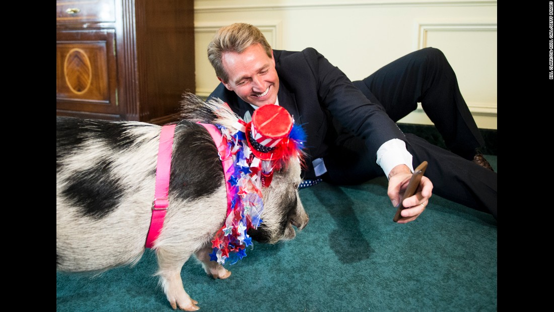 "U.S. Sen. Jeff Flake tries to take a selfie with a pig before a news conference about ""pork barrel"" spending on Wednesday, April 13."