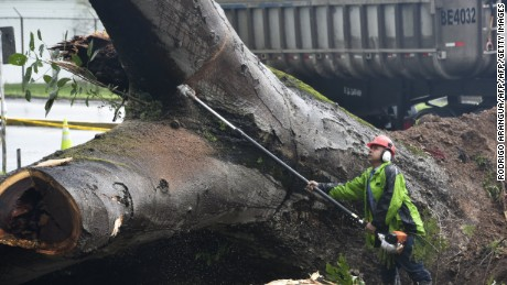 A worker cuts a tree that killed a boy when it fell during a storm in Panama City on November 22, 2016. Tropical Storm Otto, that is expected to become a full-on hurricane in the Caribbean, was lurching toward Central America on Tuesday, with its rainy fringe already causing three deaths in Panama and prompting coastal evacuations in Costa Rica. In Panama, three people died from a mudslide and a falling tree provoked by the first outer dump of Otto's heavy rains, the head of the National Civil Protection Service, Jose Donderis, told AFP.  / AFP / Rodrigo ARANGUA        (Photo credit should read RODRIGO ARANGUA/AFP/Getty Images)