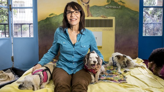 CNN Hero Sherri Franklin founded Muttville, a San Francisco-based nonprofit that finds loving homes for senior dogs.