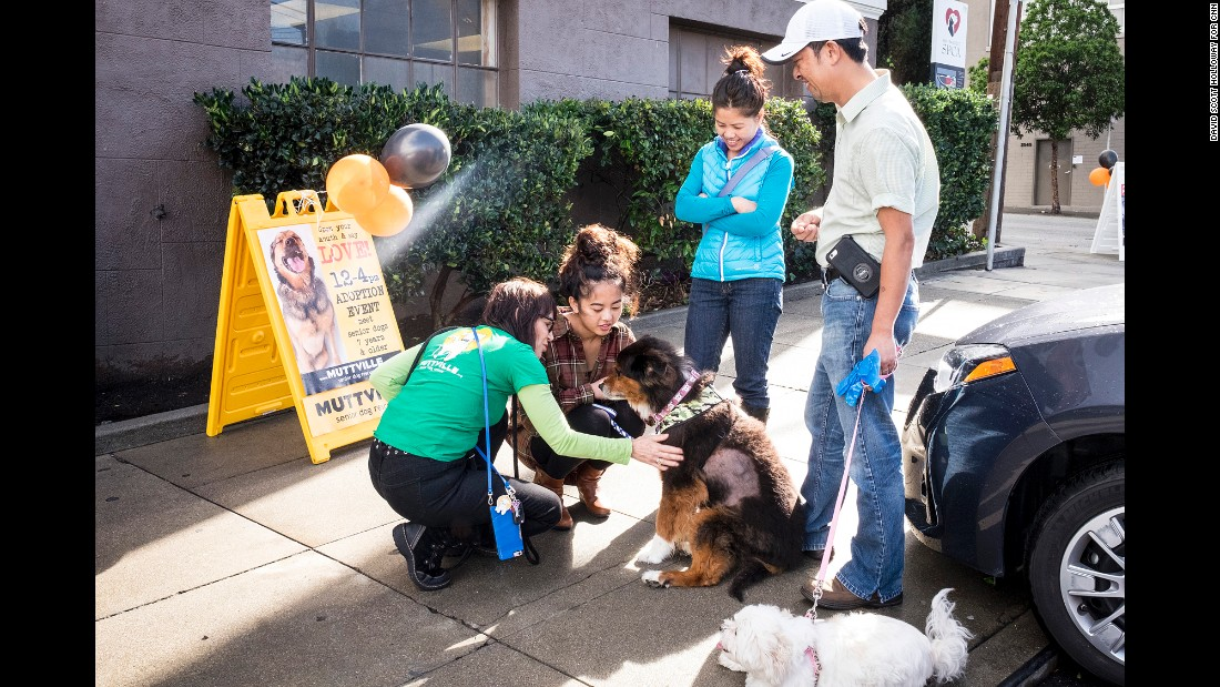 Every dog that Muttville receives sees the group's in-house veterinarian to get vaccines, a microchip, and urine and blood analysis. The group also runs a program for terminally ill dogs.