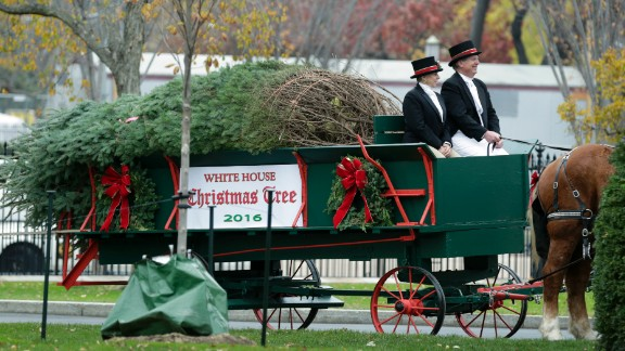 The official White House Christmas Tree is delivered to the White House in Washington, DC, on November 25, 2016.  The 19-foot (5.7-meter) Douglas Fir was donated by a tree farm in Pennsylvania.