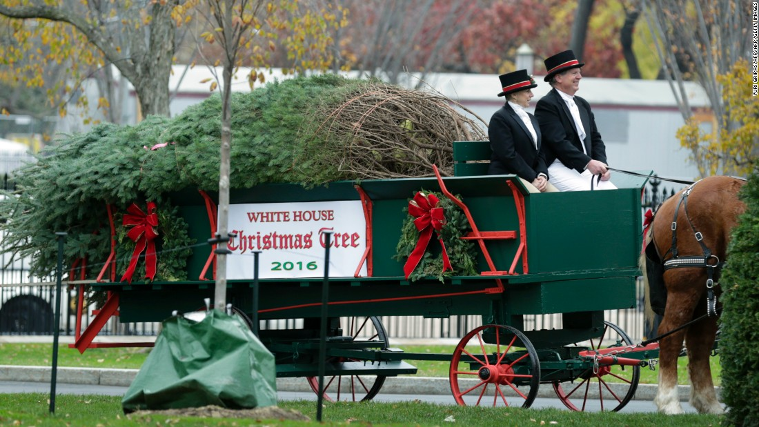 The official White House Christmas Tree is driven in for delivery.