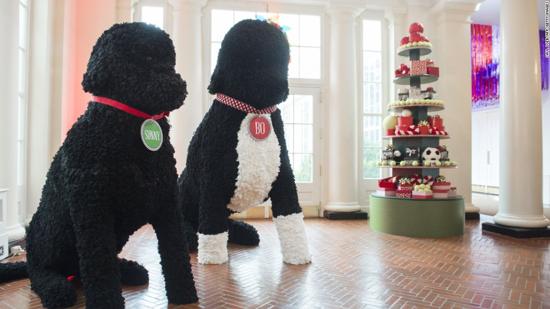 replicas of the first familys dogs and other holiday decorations tower in photos christmas at the white house - White House Christmas Decorations 2016