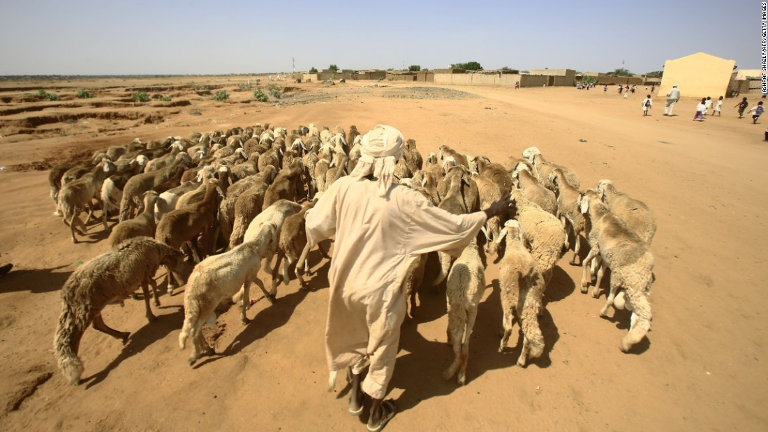 A man walks with his sheep in the Abu Shouk camp for Internally Displaced People (IDP), near North Darfur's state capital el-Fasher. According to a report by the United Nations Office for the Coordination of Humanitarian Affairs (OCHA), it is estimated 1.9 million people in Sudan will be affected by reduced agricultural and livestock production -- due to smaller farming areas, poor pastures and limited water availability.