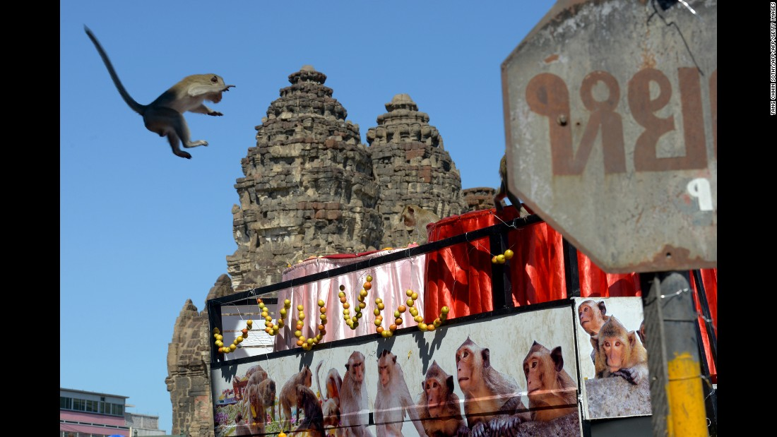 A monkey jumps onto a van loaded with fruits and vegetables near an ancient temple in Lopburi, Thailand, on Sunday, November 27. The town annually puts on a banquet for its hundreds of macaque inhabitants.