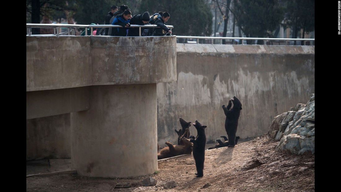 Children throw food to bears at the Central Zoo on the outskirts of Pyongyang, North Korea, on Sunday, November 27.