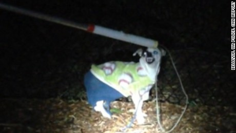 Is this dog, wearing a sweater and blue pants, yours? Cops want to know
