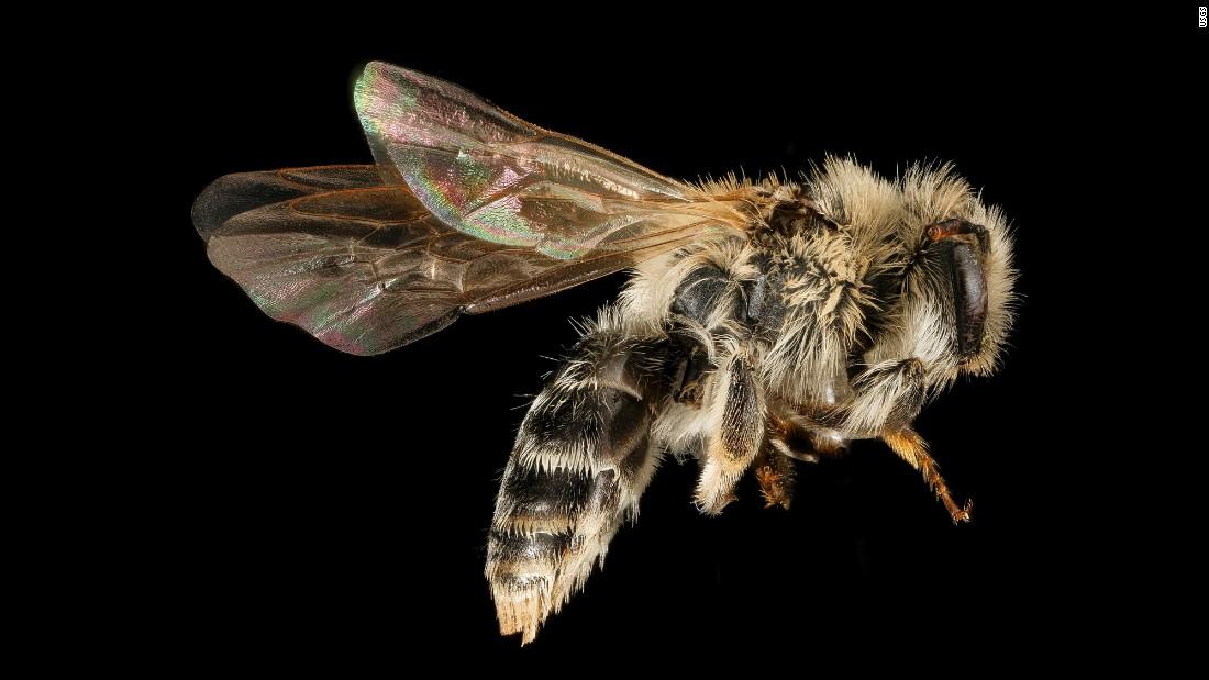 Interesting. Prompt, Honey bee vibrator congratulate, you