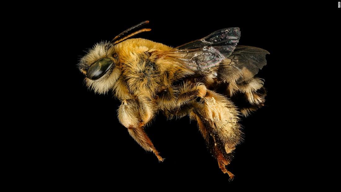 Can Honey bee vibrator