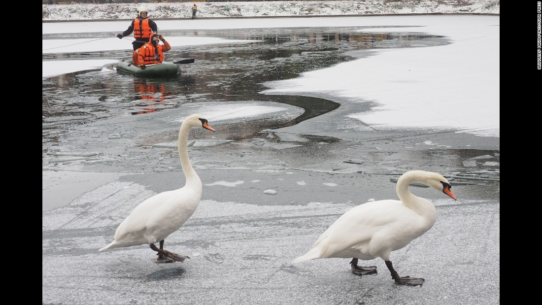 Employees of the Russian Ministry of Emergency Situations rescue swans from the frozen Patriarch Ponds in Moscow on November 2.