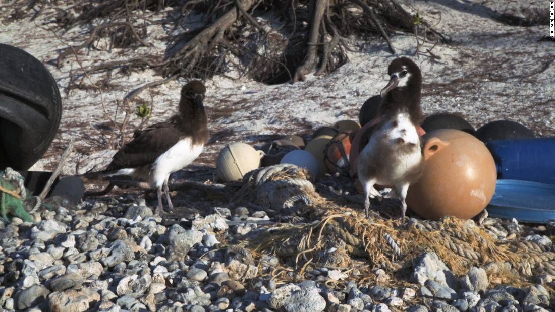 These birds are choking on a plastic ocean cnn plastic from around the world washes up on midway atoll in the remote pacific ocean publicscrutiny Images