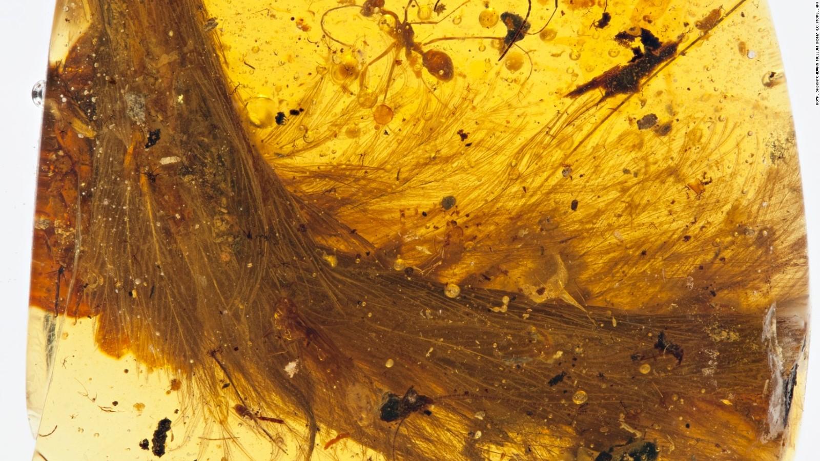 161208121636-dinosaur-amber-2-full-169.j