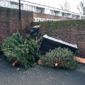 christmas tree discarded uk