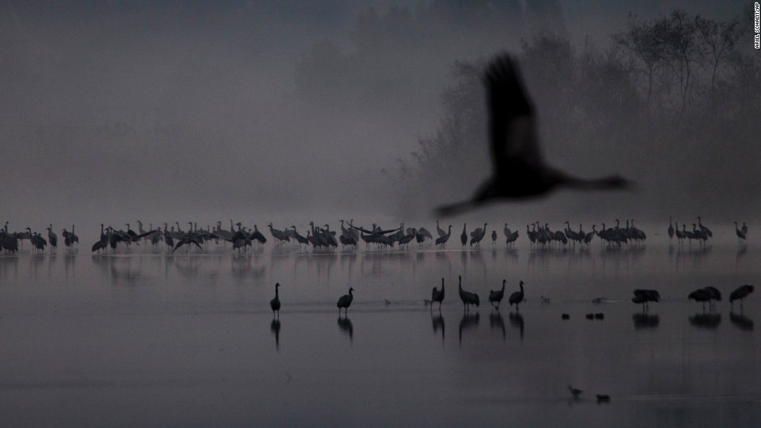 "Migrating cranes flock to the Hula Lake conservation area in northern Israel on Wednesday, December 7. <a href=""http://www.cnn.com/2016/12/01/world/gallery/week-in-photos-1202/index.html"" target=""_blank"">See last week in 27 photos</a>"