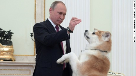 Russian President Vladimir Putin plays with his dog Yume prior to an interview with Japanese media.